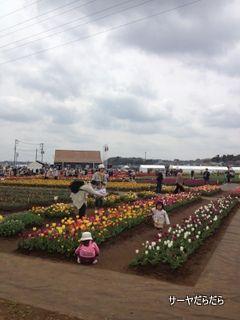 20120415 tulip 3