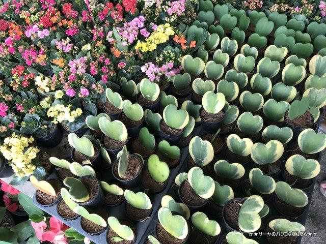 園芸市場 ナコンナヨック Klong 15 Tree Market Rangsit (10)