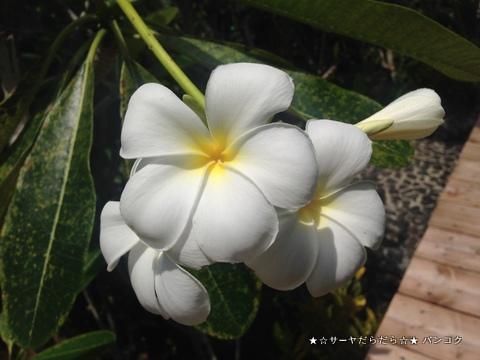パラオ スパ マングローブ SPA mangrove