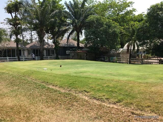 パー3ゴルフシーナカリン Par3 golf srinakarin (11)
