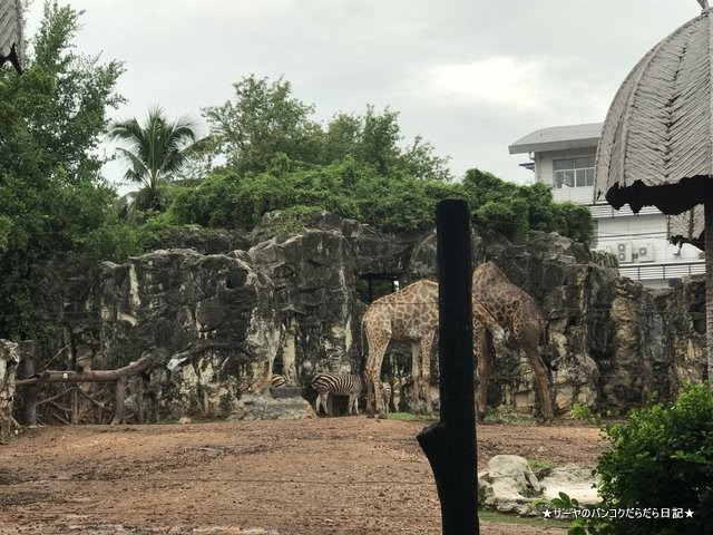 Dusit Zoo ドゥシット動物園 タイ カバ 最古 (27)