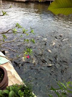 20110927 tarat klongbangloung 14