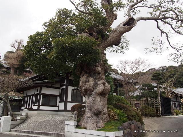 長谷寺 HASEDERA 鎌倉 KAMAKURA