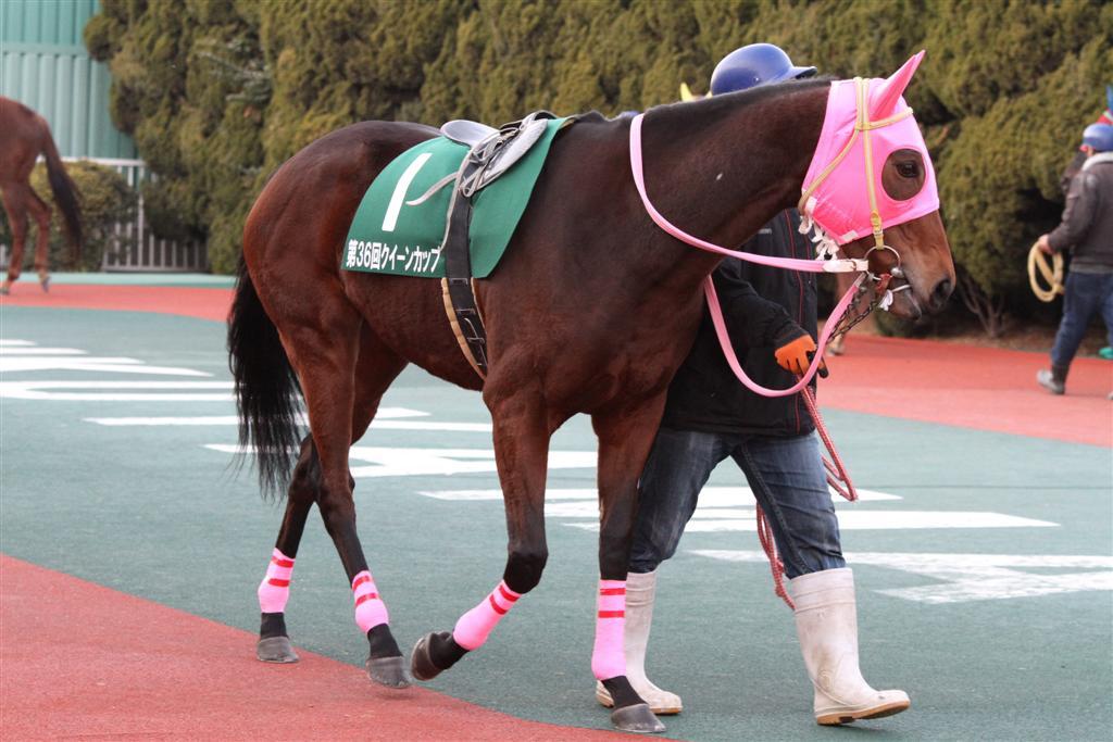 ラブミープラチナ(13/01/12・第36回 クイーンカップ・福山競馬場 ...