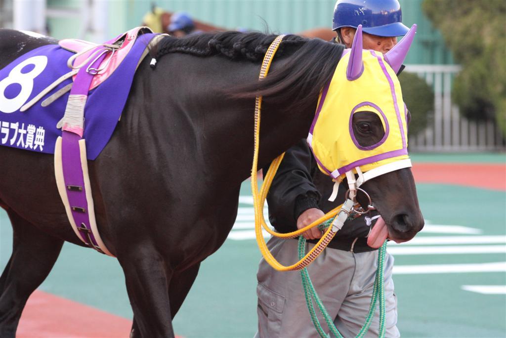 フジノコウザン(08/01/06・福山...