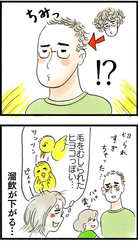 1056チキンってかヒヨコな夫_03