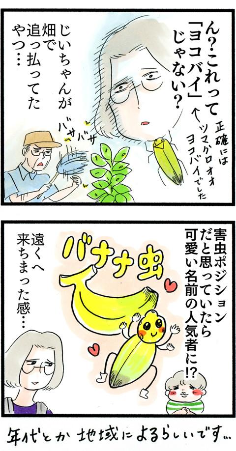 1010バナナ虫の謎_03