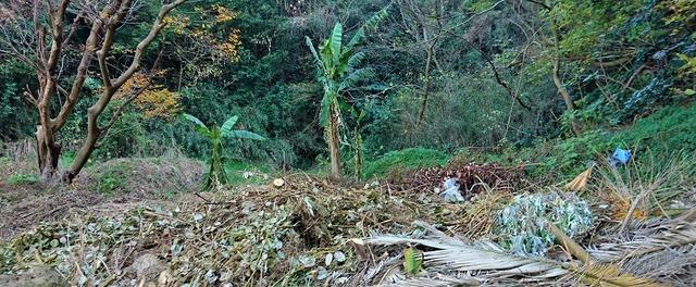 ゴミ場のバナナ