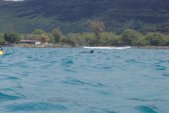 イルカ背びれ