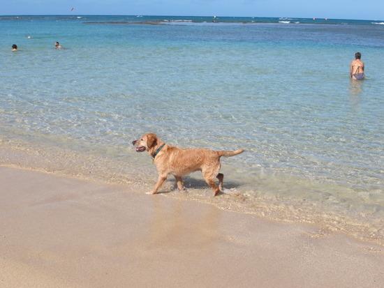 ビーチの犬
