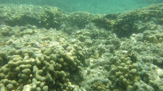 浅瀬の珊瑚