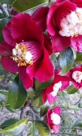 花の旅 2