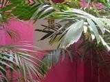 la selva