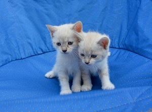 kittens-2724669__340