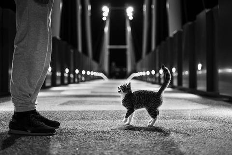 cat-5732087_640