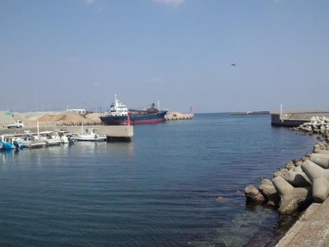 洲本港のトンビ