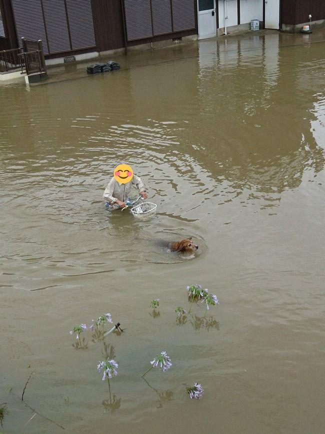 【画像】洪水の中、犬を散歩させる老人が見つかる