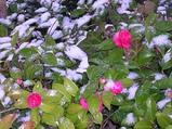 雪が降る〜