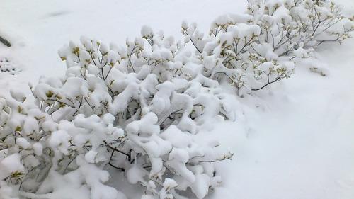 大雪...