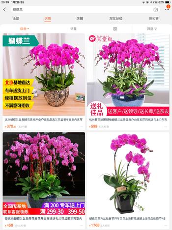 胡蝶蘭の価格
