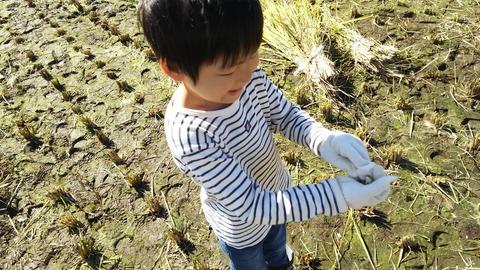 稲刈り04