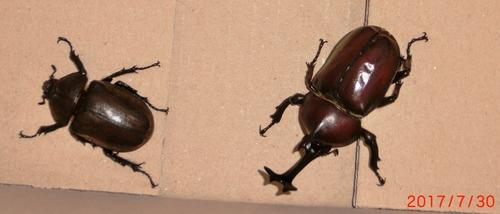 甲虫2746