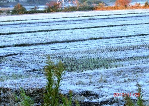 霜の朝3479