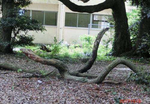 大蛇2209