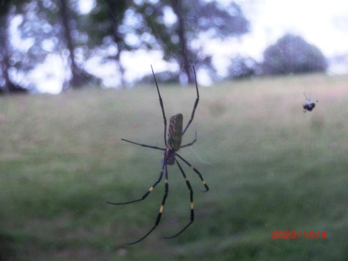蜘蛛8500