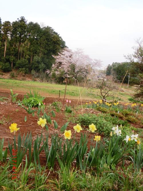 春の風景2030