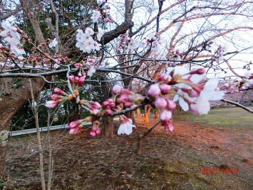 桜G1900