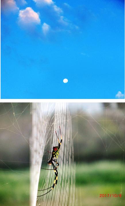 171009月雲蜘蛛無題