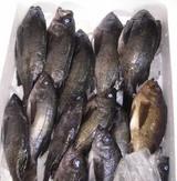 ひらの鮮魚店
