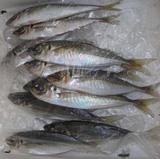 平野鮮魚店のアジ