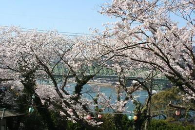 瀬戸公園の桜