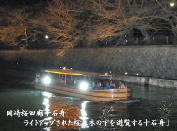 岡崎桜回廊十石舟「ライトアップされた桜並木の下を遊覧する十石舟」