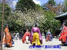 白峯神社:「黄桜と蹴鞠」