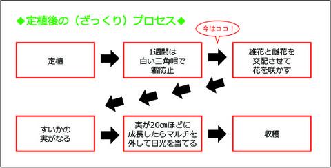 定植後プロセス