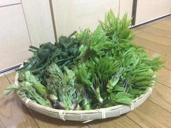 大石田町 山菜