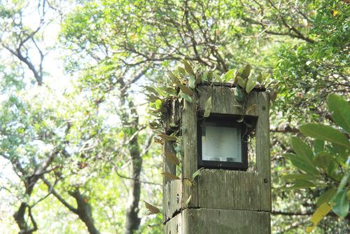 公園ランプ