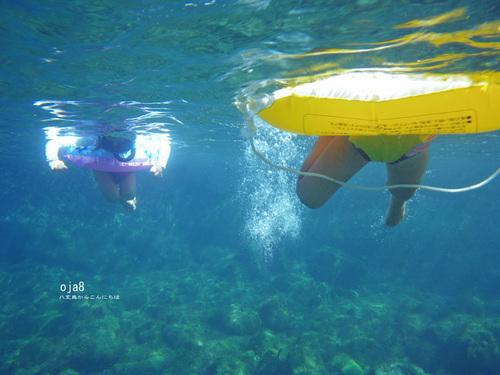 いっちーとニコ泳ぐ