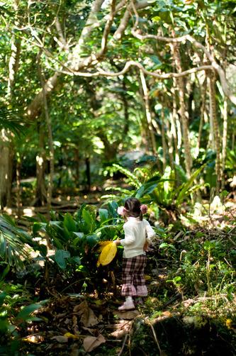 ジャングルにこ