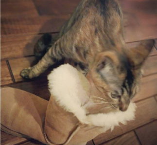 ネコとラーメン3