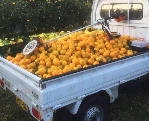 軽トラ一杯のオレンジ