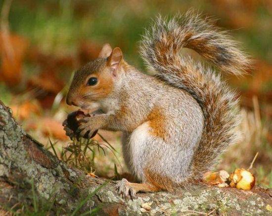 【画像】秋と動物が一緒に写ってる画像を貼って癒されるスレ。