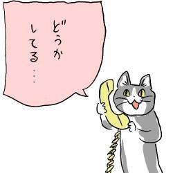 この猫の画像ください
