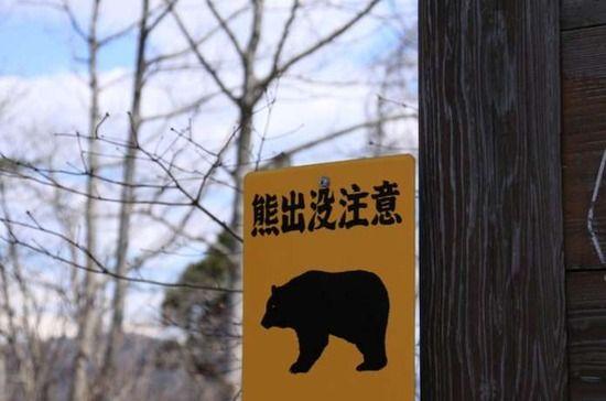 北海道でヒグマの被害相次ぐ・・・。飼い犬が襲われ死骸を穴に埋める姿も。。。
