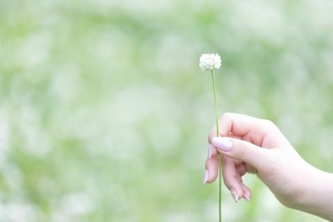flowerhandGFVL3517_TP_V