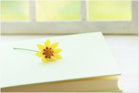 黄色の花と本