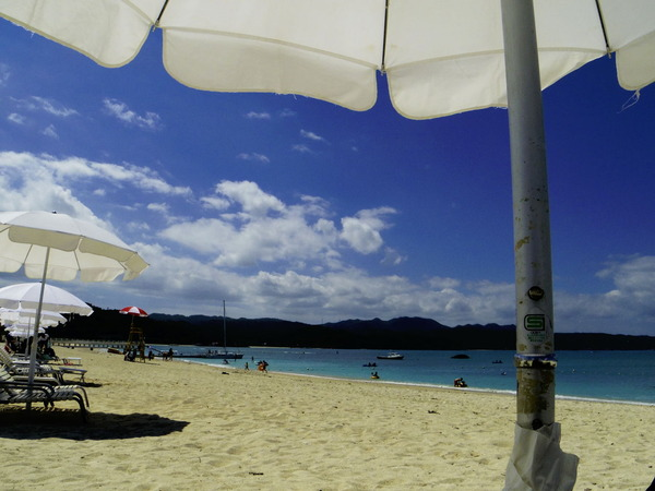 風車コラム8基目:出会いは突然に。沖縄大宜味村での邂逅。